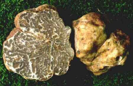 Visite guidate enogastronomiche San Miniato, degustazione tartuffi San Miniato